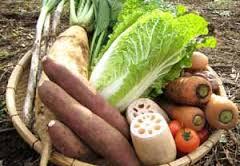 大地を守る会 有機野菜