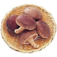 驚くべき椎茸の栄養!