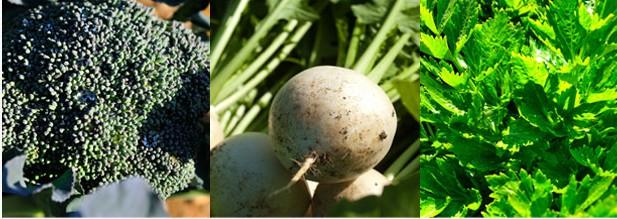 オイシックス 野菜2
